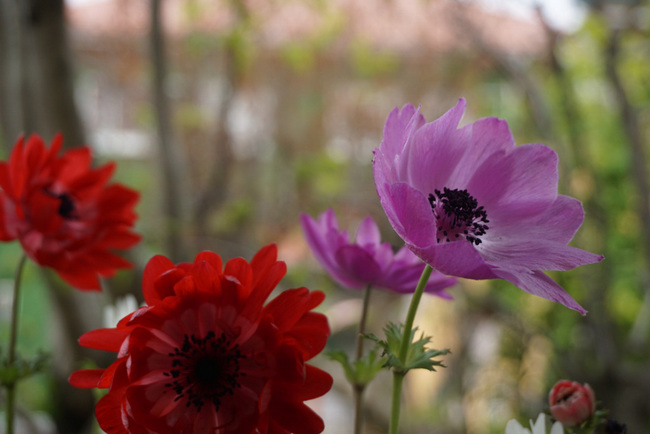 anemone01.jpg